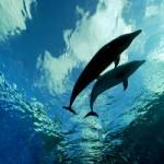 体長4m以上はクジラ、それより小さいのはイルカ