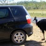 ヒクイドリは「世界で最も危険な鳥」としてギネスブックに登録されたことがある