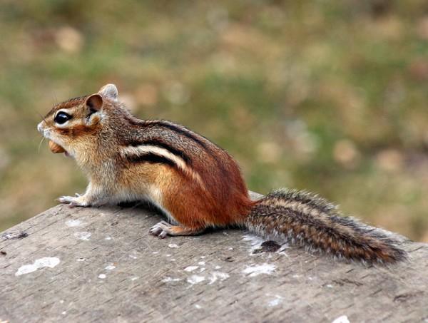 尻尾 とれる リス