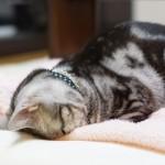 ネコが「ごめん寝」をするのは光がまぶしいから