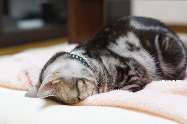 cat #850