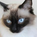 8月8日は世界ネコの日