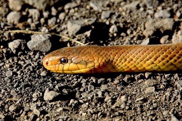 ヘビが体をくねらせながら滑るように動けるのはウロコの表面が潤滑油でコーティングされているため