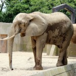 動物園の柵のない展示にはハーゲンベック方式と言う立派な名前がつけられている