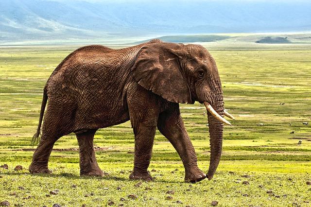 8月12日は世界ゾウの日