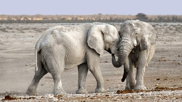 4月28日は象の日
