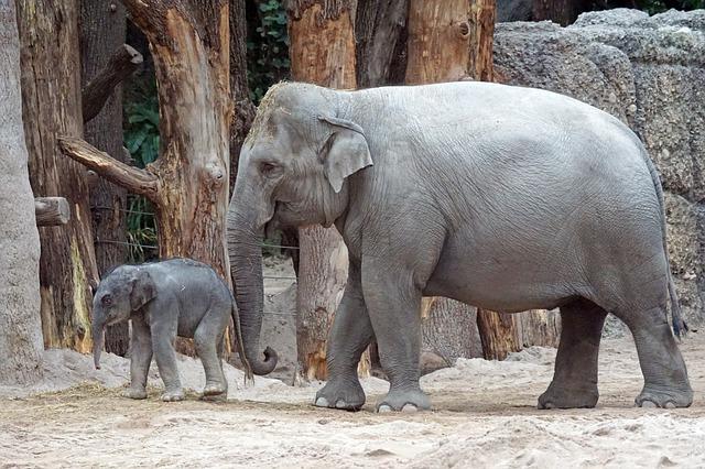 インドゾウの表面積を求める公式にはシュリクマー関数という名前が付けられている