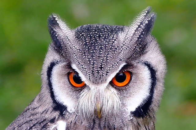 フクロウの目玉は頭蓋骨に固定されて動かない