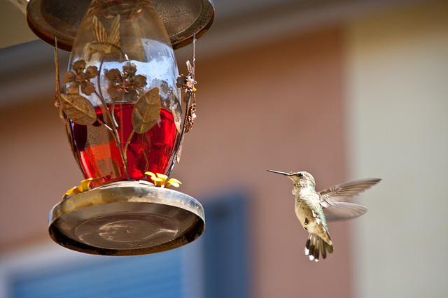 ハチドリだけ!ホバリングできるから後ろにも飛べる
